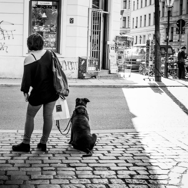 Walking The Dog © Knut Skjærven